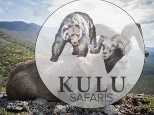 Magadan snow sheep hunting with Kulu Safaris outfitter