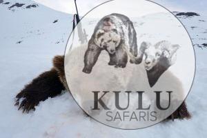 Brown bear hunting with Kulu Safaris hunting tours
