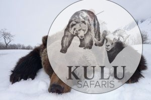 Kulu Safaris brown bear hunting in Magadan, Russia