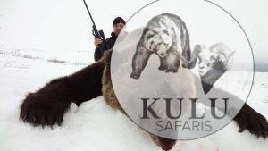 russian brown bear hunts