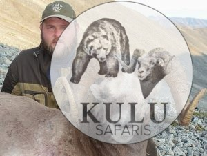 Snow Sheep hunting with Kulu Safaris