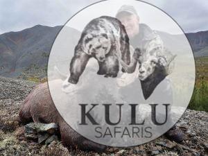 Magadan snow sheep hunting, Kulu Safaris