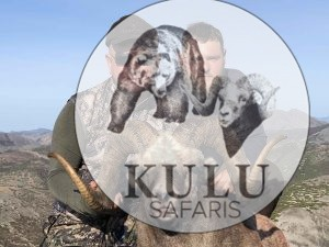 Snow sheep hunt in Magadan, Russia with Kulu Safaris outfitter
