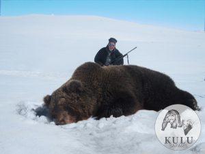 Big brown bear trophy