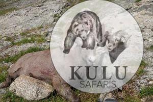John Allen Camps, hunter, hunt. trophy, game, Safari, tours, nature, mountains, Magadan, Russa, Kulu Safaris