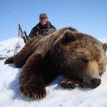 Giant Russian brown bear at Kulu Safaris